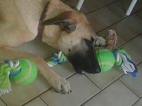 lusik, jeune chien