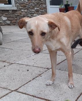 Lucas, chien moyen beige au nez rose