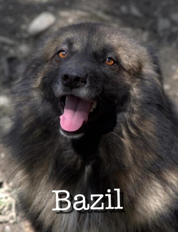 BAZIL -   3 ans - Asso Alerte sos - Sotchi (Russie) BAZIL
