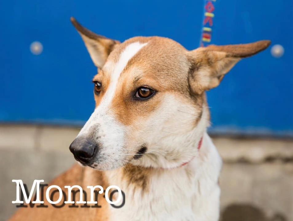 MONRO - 3 ans - Asso Alerte Sos - Sotchi (Russie) MONRO