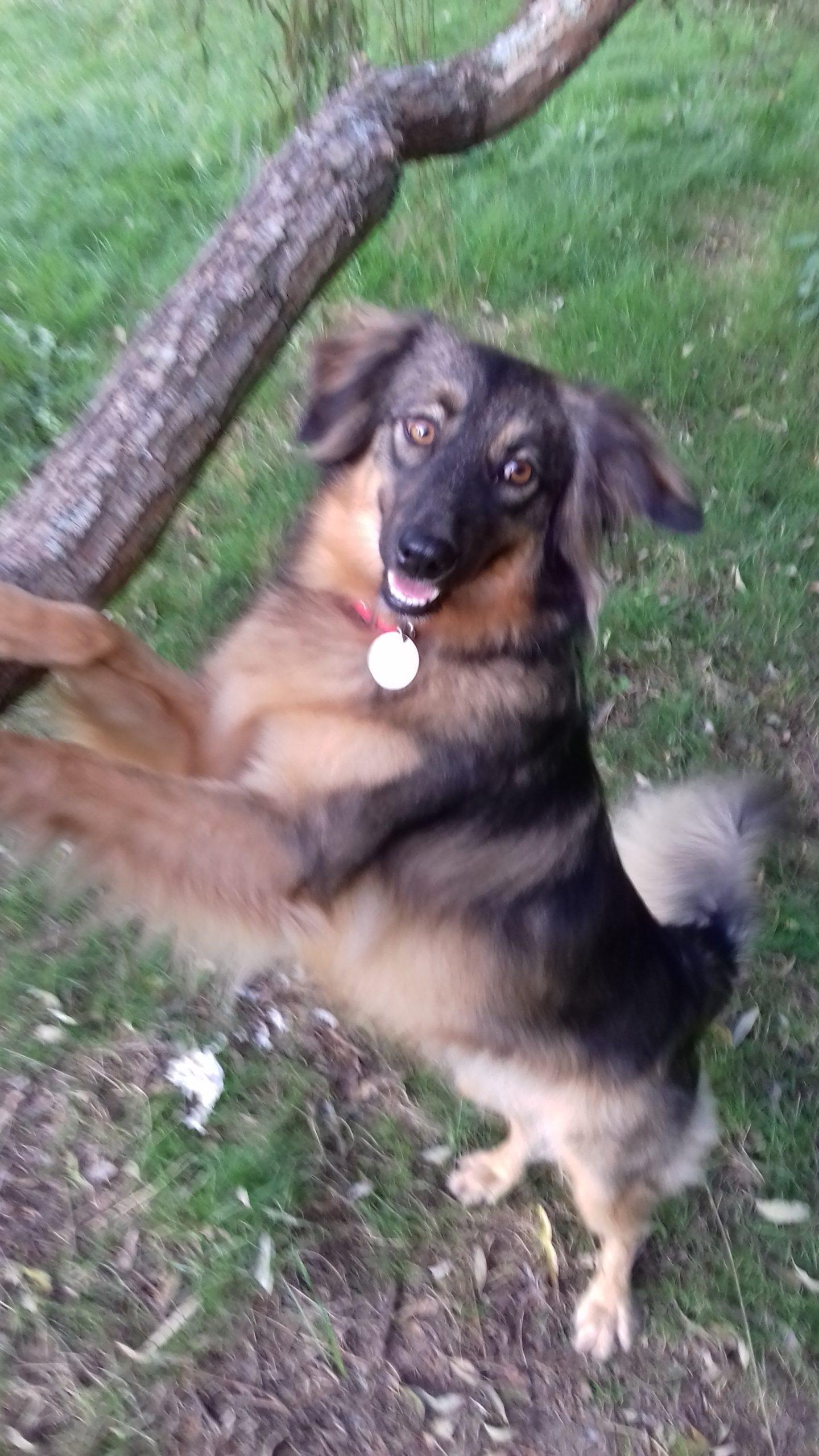 CHALI adopter chien de sochi