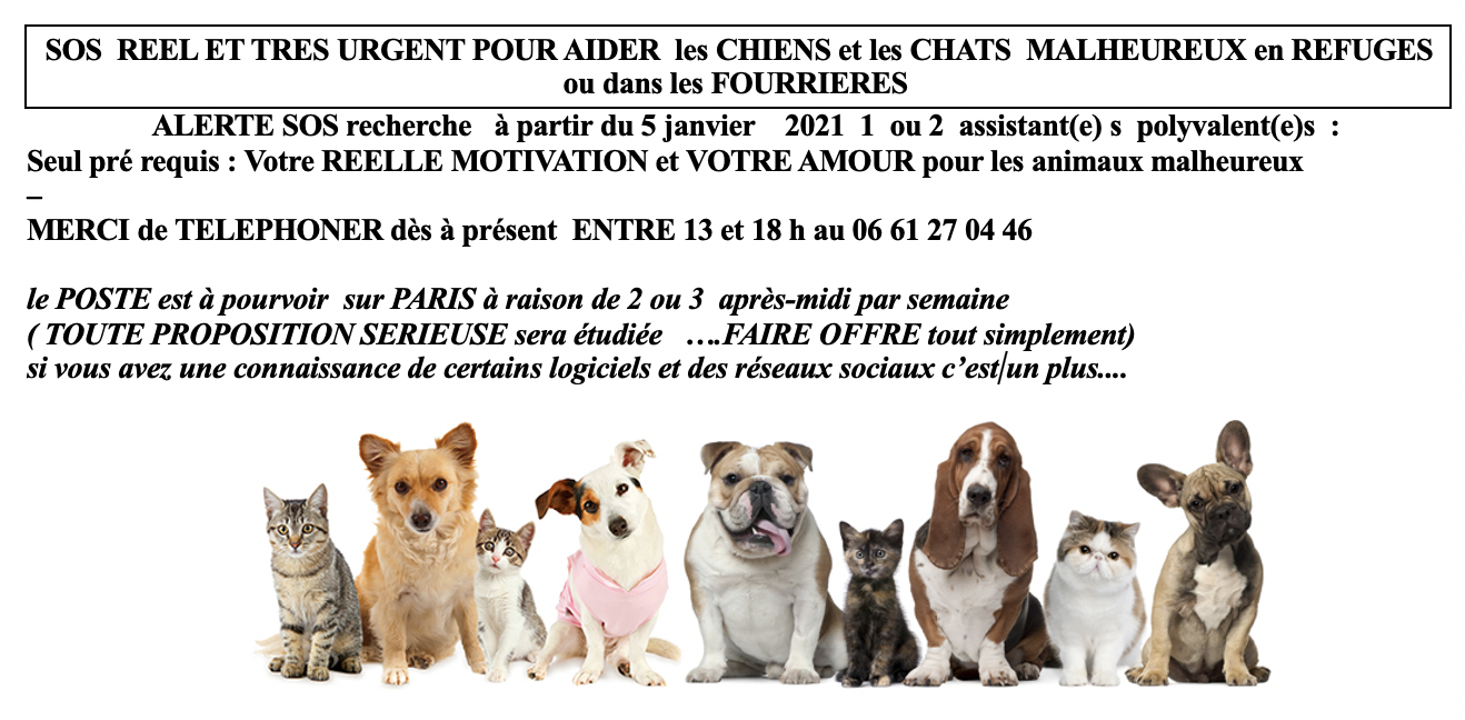 Adoption Chiens Et Chats Association Alerte Sos